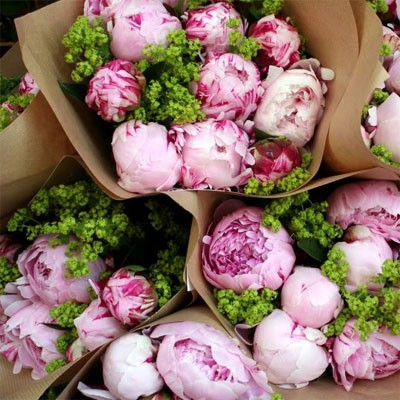 paris-peonies
